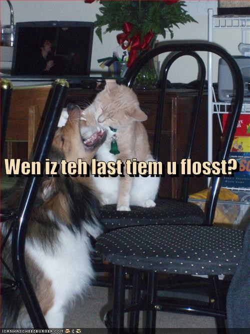 Cheezburger Image 3500539392