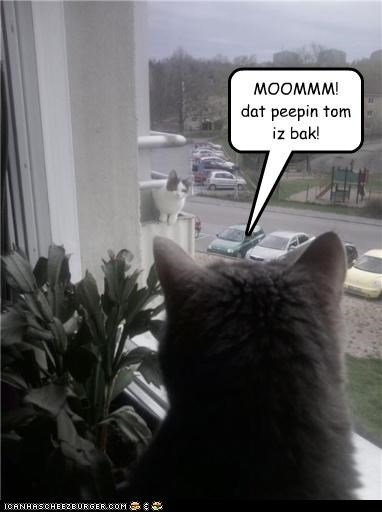 annoying momcat peeping