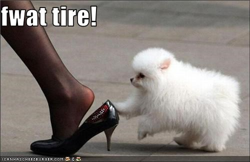 flat tire high heel puppy whatbreed shoe