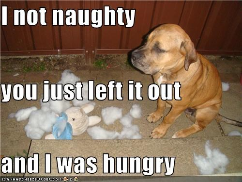 dogs naughty shredded stuffed animal what breed