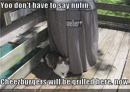 Cheezburger Image 3501620224