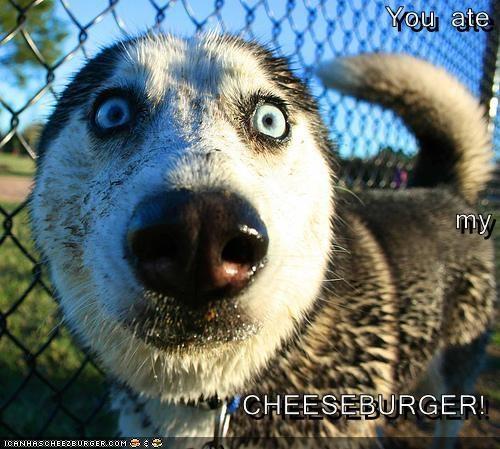 Cheezburger Image 3503968256