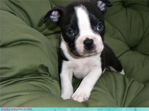 cute face puppy - 3505132800