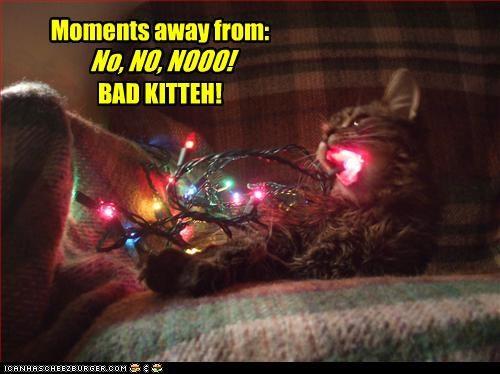 Moments away from: BAD KITTEH! No, NO, NOOO!
