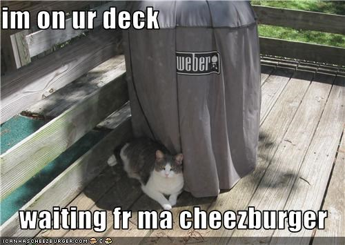 Cheezburger Image 3505651968