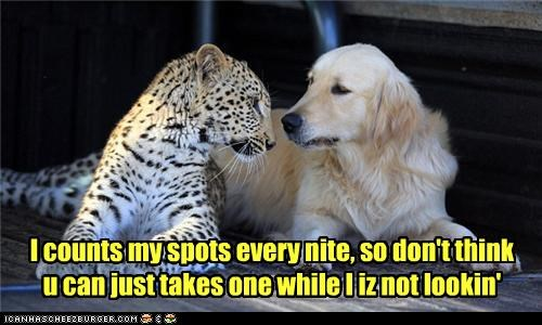 cheetah,dogs,golden retriever,spots,thief,thief.