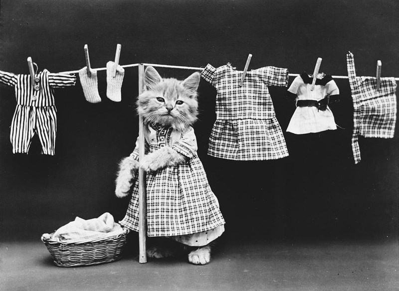 vintage photos of cats and dogs acting like humans