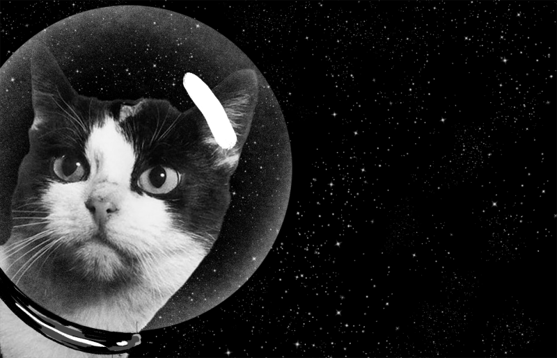 The story behind the first cat in space