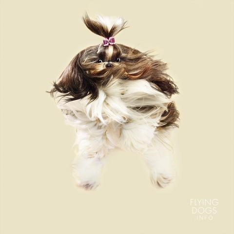 photos of flying dogs