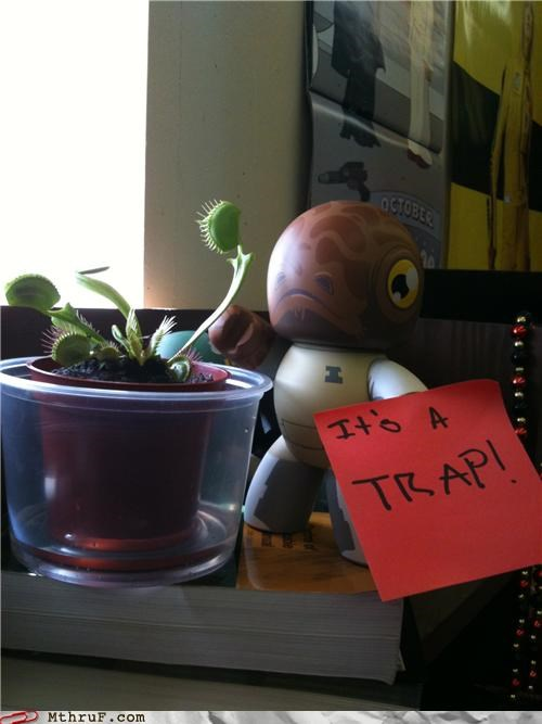 4chan,admiral ackbar,cliché,decoration,easy joke,get it,its a trap,lazy,nerd decor,nerdy,plant,quote,sculpture,star wars,trap,venus fly trap,word bubble