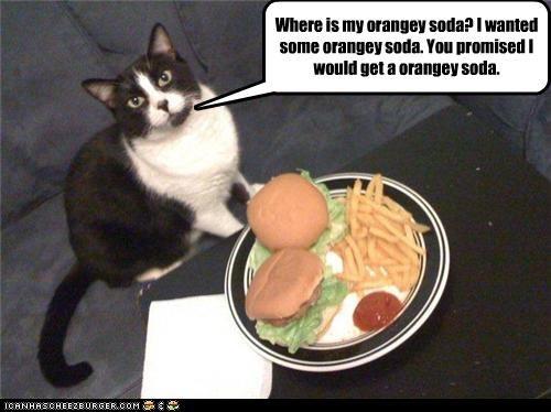 Cheezburger Image 3507313664