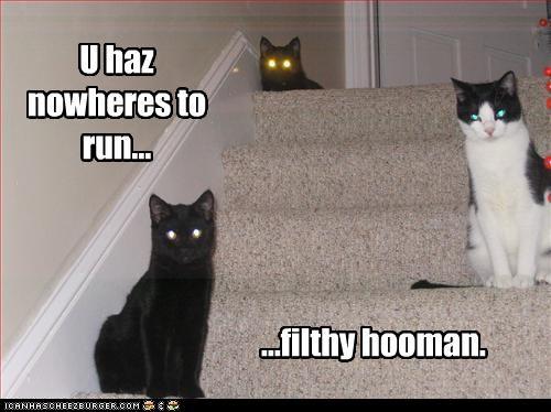U haz nowheres to run... ...filthy hooman.