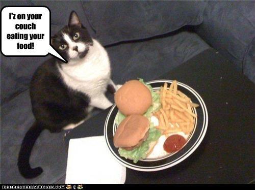 Cheezburger Image 3507511808