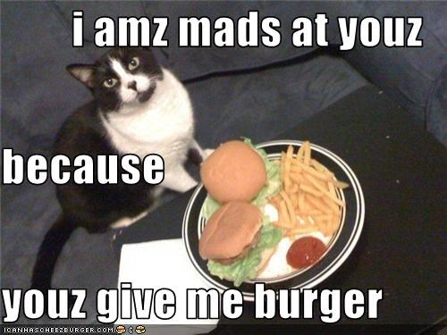 Cheezburger Image 3507579648