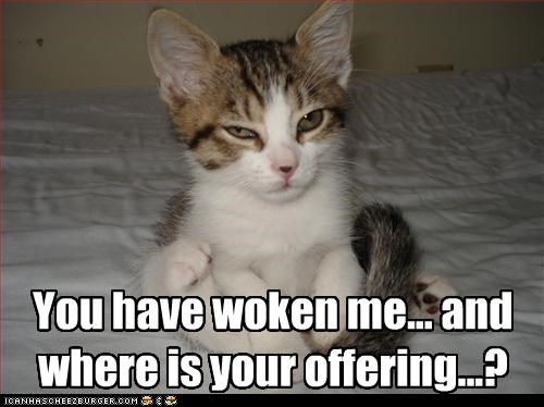 awake,grumpy,kitten,offering