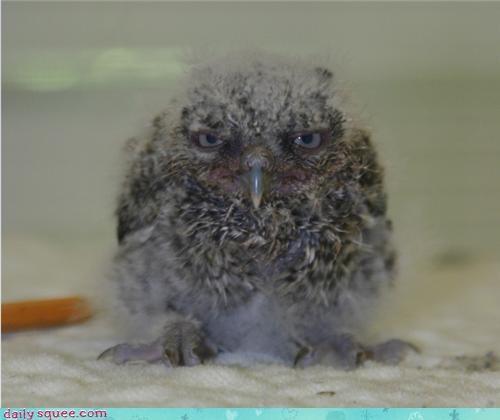 face Owl serious - 3508004864