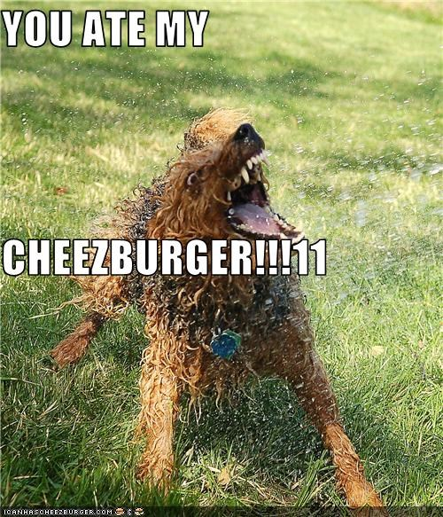Cheezburger Image 3508146432