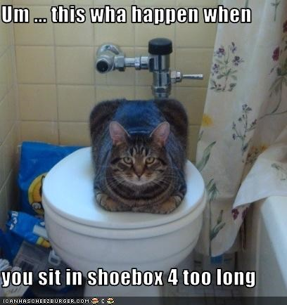 bathroom,boxcat,look a like,shoe