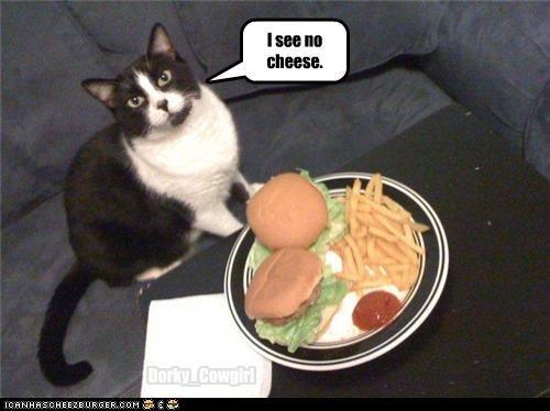 Cheezburger Image 3508344576