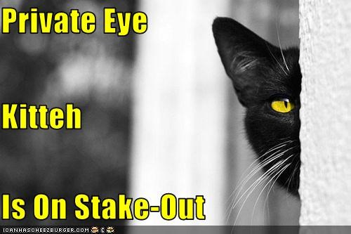 black and white,caption,captioned,cat,eye,private eye,stakeout,staking out