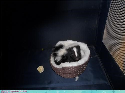 baby skunk so tiny - 3508811264