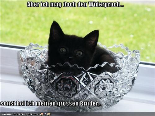 Cheezburger Image 3508899072