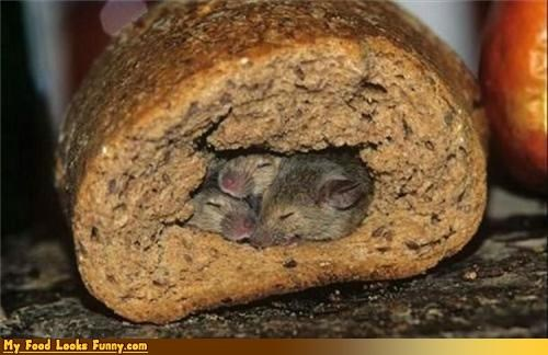 animals bread mice sanitary sleeping - 3509126656