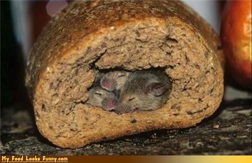 animals bread mice sanitary sleeping