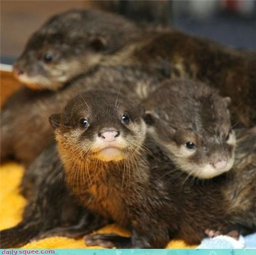 face,lookalikes,otter