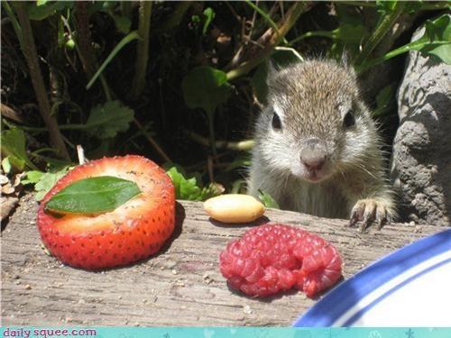 face noms squirrel - 3509314816