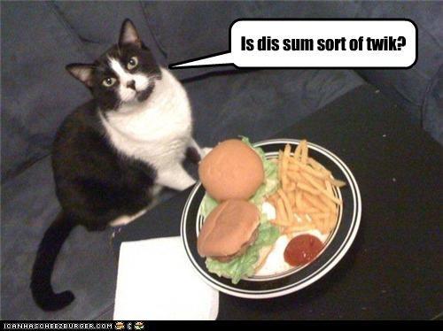 Cheezburger Image 3509650176