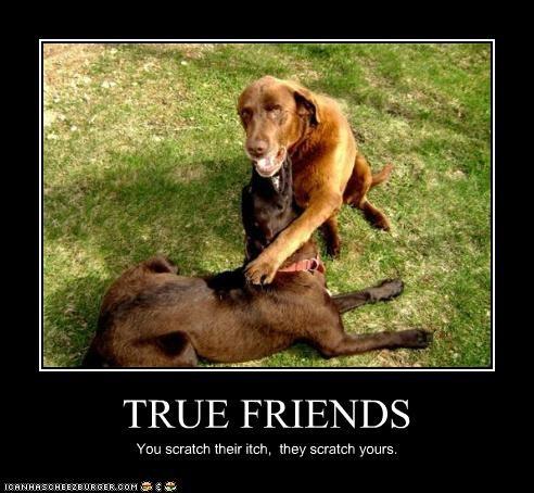 friends itch outside scratch - 3509700608