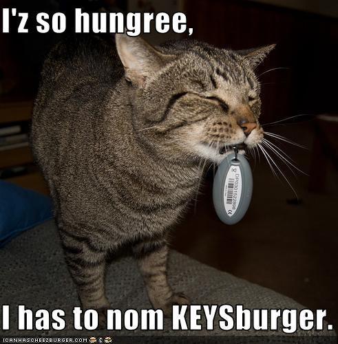 Cheezburger Image 3509756416