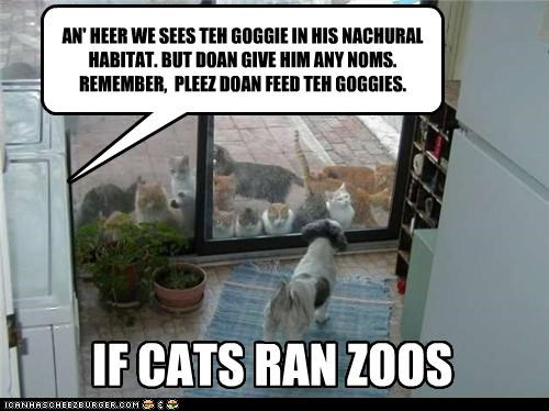 AN' HEER WE SEES TEH GOGGIE IN HIS NACHURAL HABITAT. BUT DOAN GIVE HIM ANY NOMS. REMEMBER, PLEEZ DOAN FEED TEH GOGGIES. IF CATS RAN ZOOS