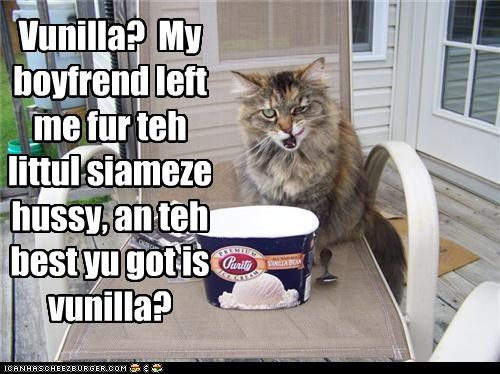 boyfriend,caption,captioned,cat,chocolate,flavor,hussy,ice cream,left,siamese,upset,vanilla
