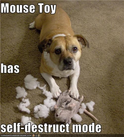 mess mouse pit bull puppy self destruct stuffing toy