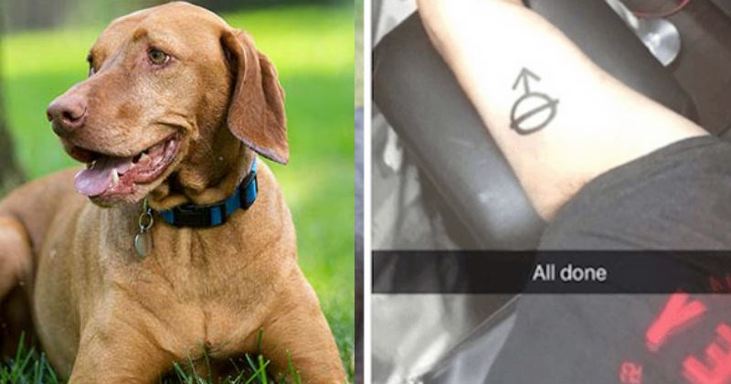 Guy gets same tattoo as his dog without checking its meaning, and hilariousness ensues.