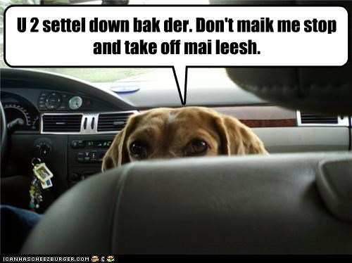 dachshund driving Hall of Fame parent threat - 3511049984