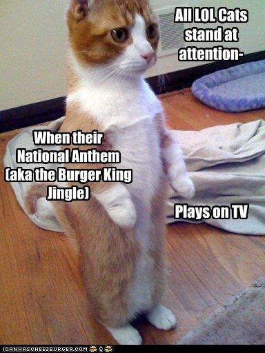 anthem,burger king,cat,standing