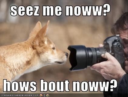 camera lolfoxes - 3512874496