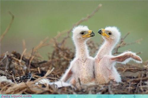 baby,bird,twins