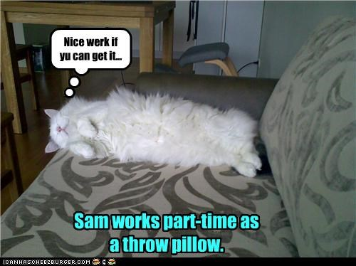 cat couch Pillow work - 3513248512