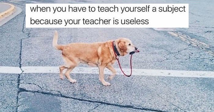 Funny memes about college and university, essays, assignments, classes, for college students. Cover photo is a meme of a dog walking itself, for when you need to teach yourself a subject because your teacher is so useless.