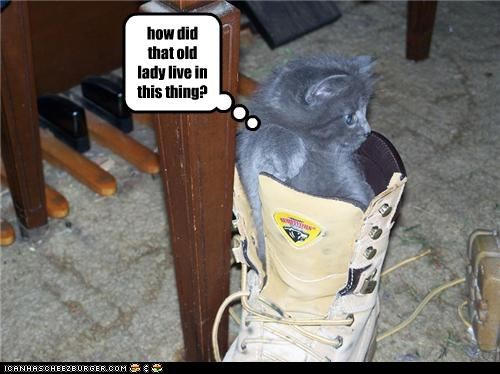 cute kitten old lady shoe - 3514760960