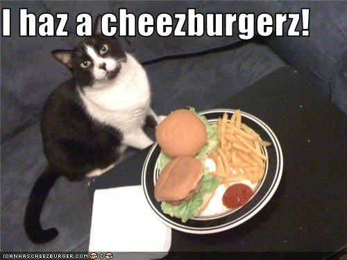 Cheezburger Image 3514769408