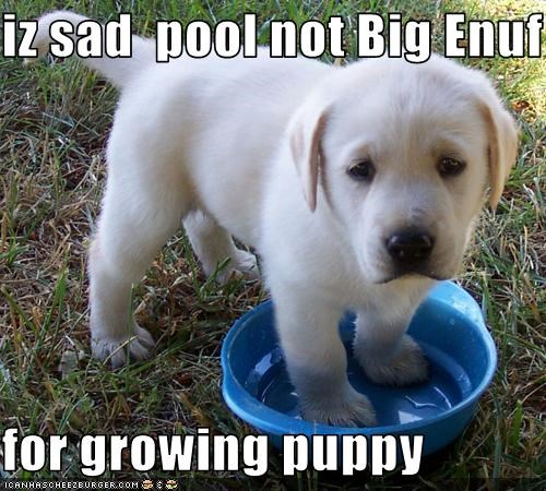 cute,Growing,pool,puppy,Sad,water dish