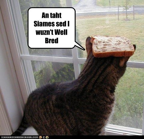 An taht Siames sed I wuzn't Well Bred