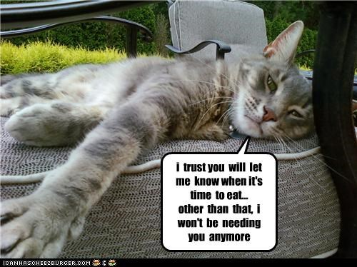 fud lazy servant - 3515155712