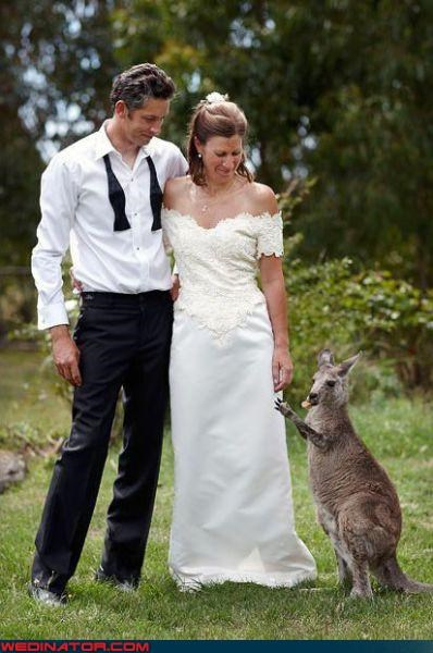 australian bride groom kangaroo marsupial miscellaneous-oops missing ring surprise technical difficulties thief were-in-love - 3516305920