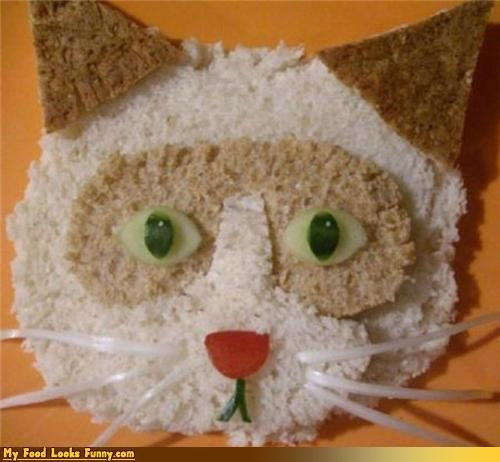 animal bread cat cat face crackers kitten whiskers - 3516316416